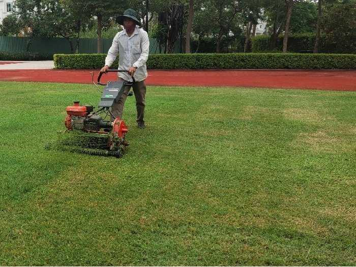 Máy cắt cỏ  sân vườn đẩy tay máy mini