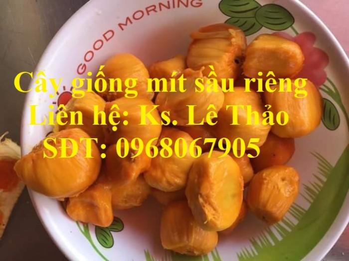 Giống Mít Sầu Riêng, Bán Giống Mít Sầu Riêng Chuẩn 100%, F1. Hàng Cam Kết Giấ1