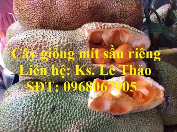 Giống Mít Sầu Riêng, Bán Giống Mít Sầu Riêng Chuẩn 100%, F1. Hàng Cam Kết Giấ5