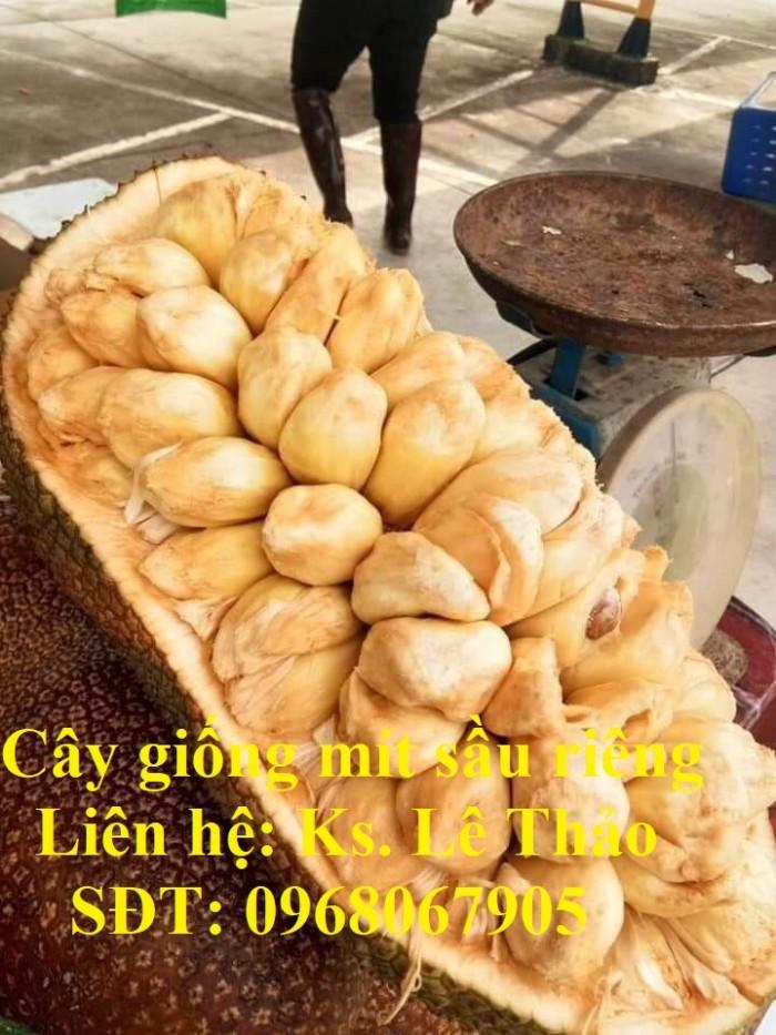 Giống Mít Sầu Riêng, Bán Giống Mít Sầu Riêng Chuẩn 100%, F1. Hàng Cam Kết Giấ12