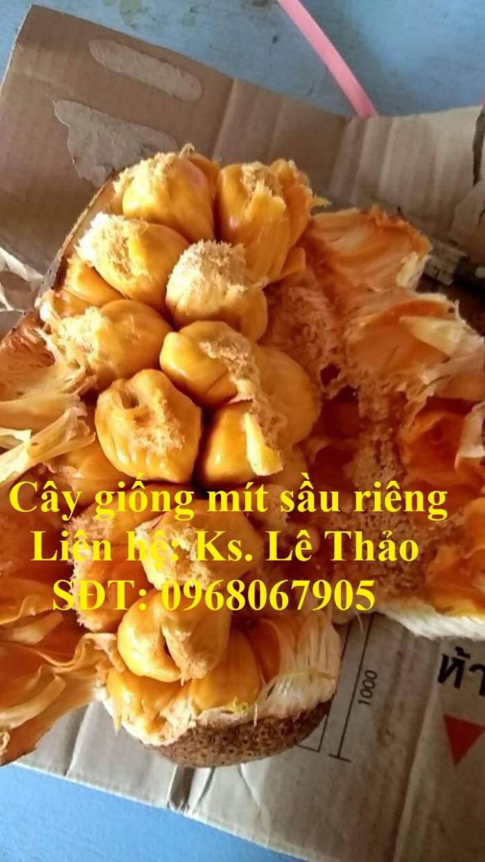Giống Mít Sầu Riêng, Bán Giống Mít Sầu Riêng Chuẩn 100%, F1. Hàng Cam Kết Giấ14