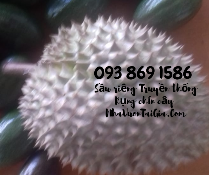 Mua sầu riêng rụng chín cây  trong ngày ngon TPHCM Vườn Nhà Dậu - gọi 093 869 1586 2