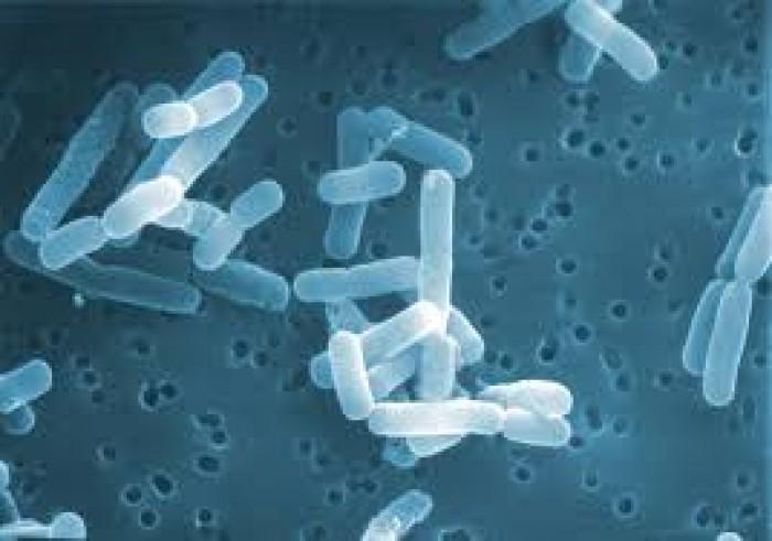 Men ví sinh Lactobacillus reuterii