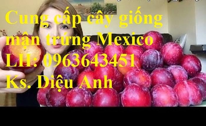 Cung cấp cây giống mận trứng Mexico, cây giống mận đỏ nhập khẩu uy tín, chất1