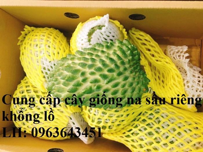 Cung cấp cây giống na sầu riêng khổng lồ nhập khẩu chuẩn, uy tín, giao toàn4