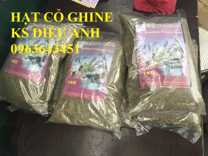 Chuyên giống cỏ chăn nuôi: Cỏ VA06, cỏ ghine, cỏ chịu ngập chịu mặn,cỏ voi, ả10