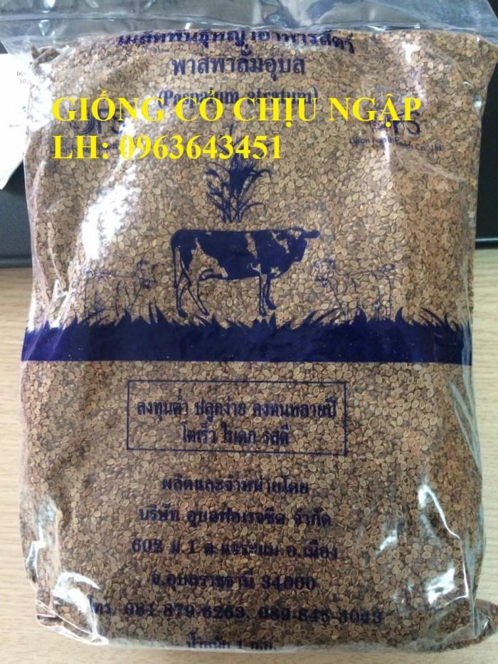 Chuyên giống cỏ chăn nuôi: Cỏ VA06, cỏ ghine, cỏ chịu ngập chịu mặn,cỏ voi, ả12
