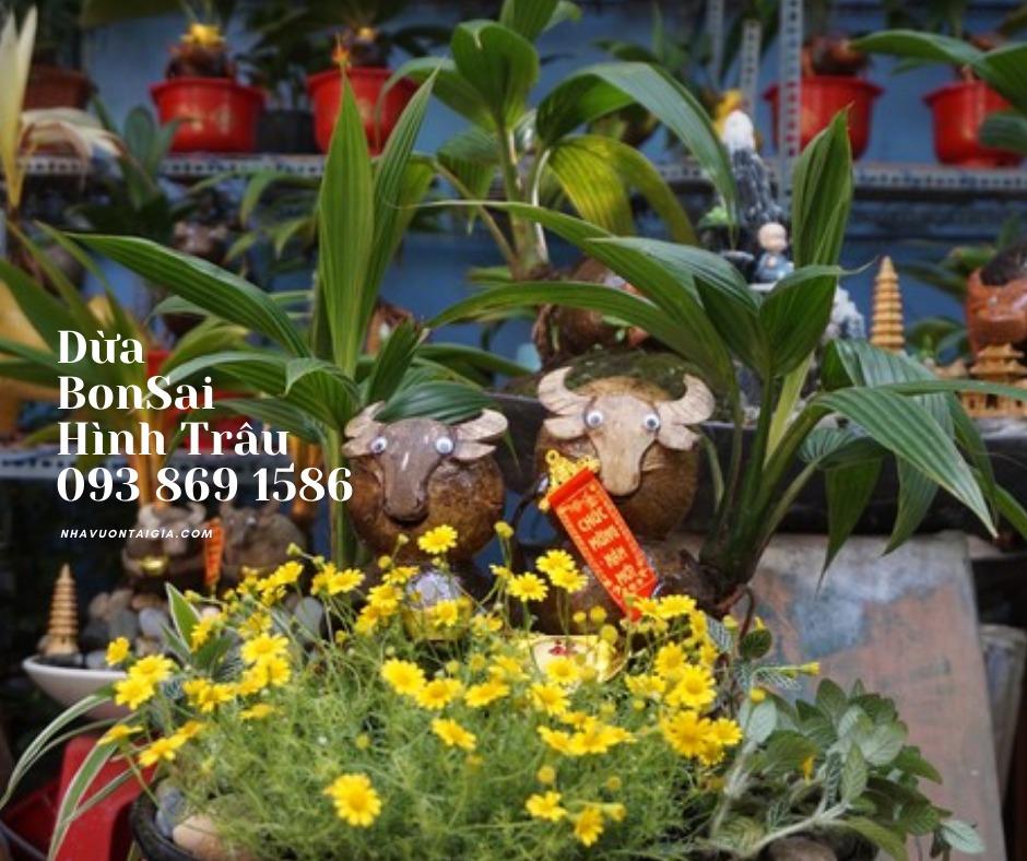 Bonsai dừa hình trâu trồng chậu từ gỗ dừa tự nhiên8