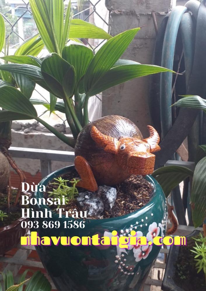 Bonsai dừa hình trâu trồng chậu từ gỗ dừa tự nhiên6