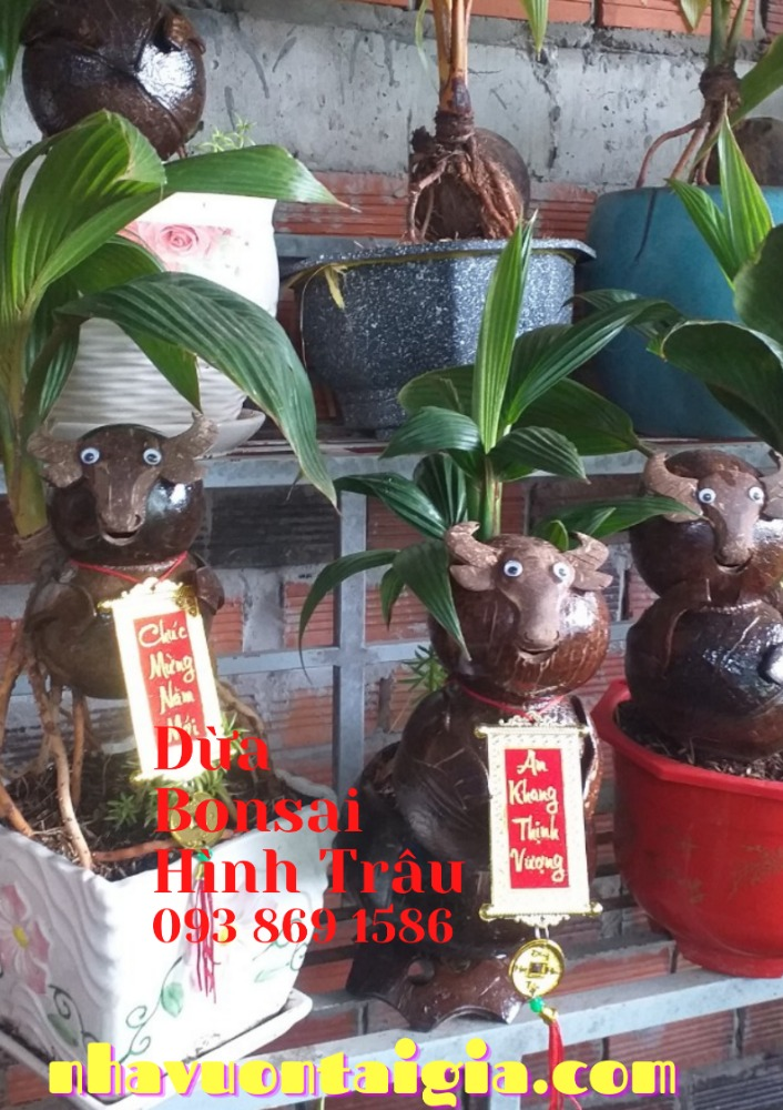 Bonsai dừa hình trâu trồng chậu từ gỗ dừa tự nhiên5