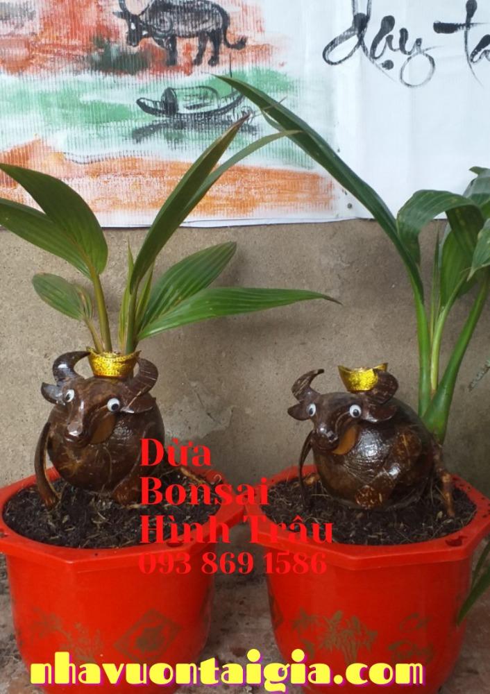 Bonsai dừa hình trâu trồng chậu từ gỗ dừa tự nhiên4