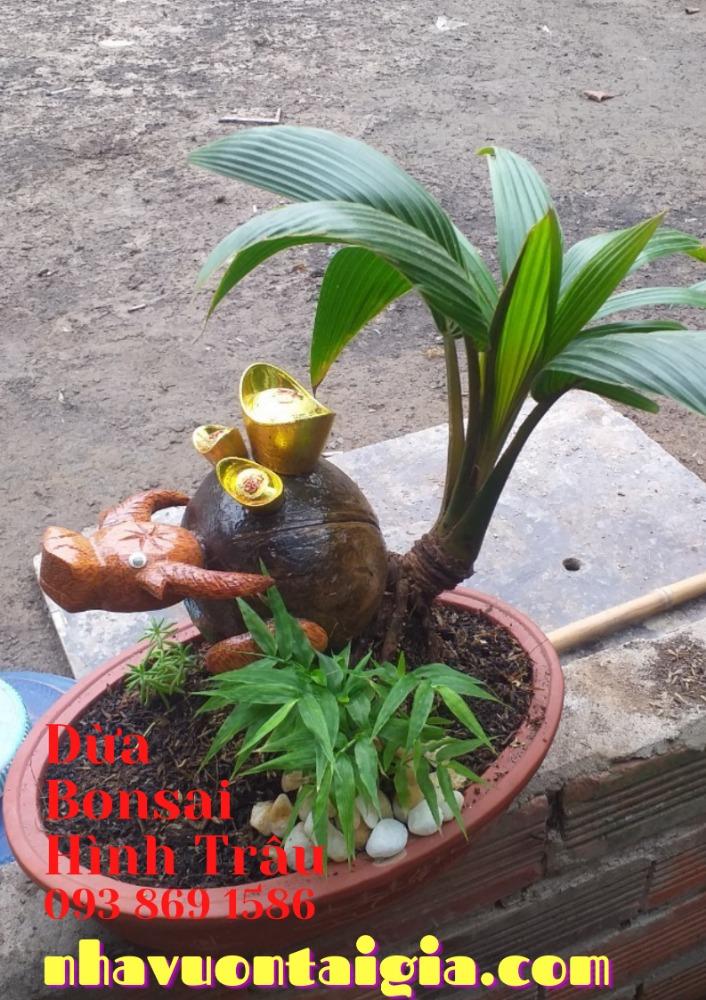 Bonsai dừa hình trâu trồng chậu từ gỗ dừa tự nhiên2