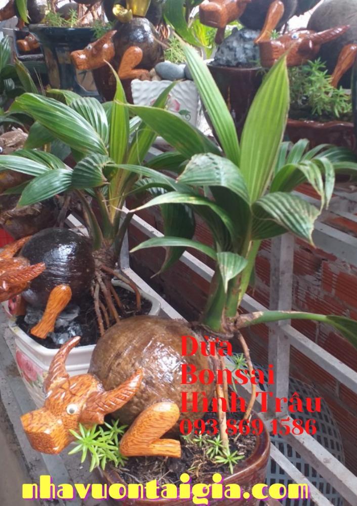 Bonsai dừa hình trâu trồng chậu từ gỗ dừa tự nhiên1