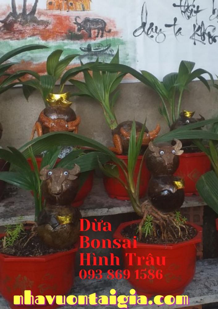 Bonsai dừa hình trâu trồng chậu từ gỗ dừa tự nhiên0