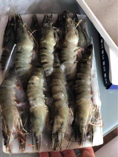 Tôm sú Minh Phú mua 2 khay 10 con có giá ưu đãi4