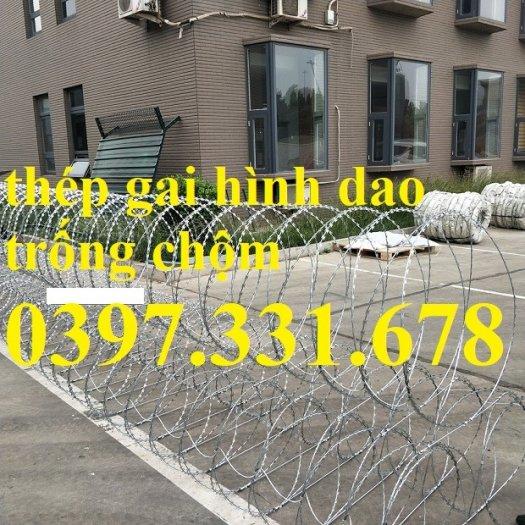 Thép gai hình dao, thép tường rào, thép gai mạ kẽm DK 35cm hàng sẵn kho tại Hà Nội2