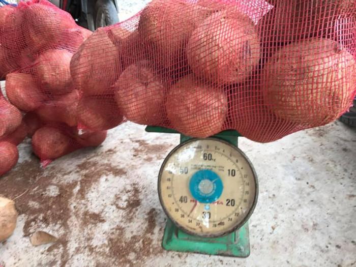 Vựa Dừa Bến Tre cung cấp dừa khô, tươi  toàn quốc  0935761797 (Phúc)  0