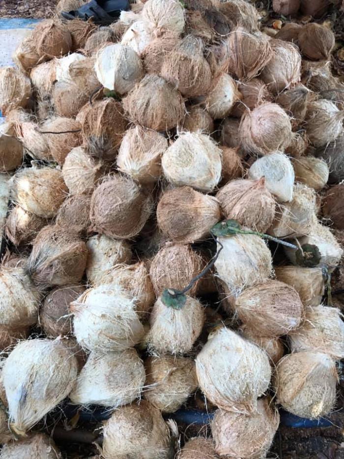 Vựa Dừa Bến Tre cung cấp dừa khô, tươi  toàn quốc  0935761797 (Phúc)  2