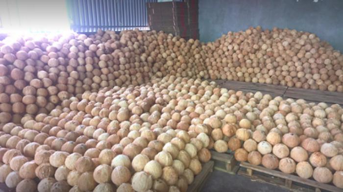 Vựa Dừa Bến Tre cung cấp dừa khô, tươi  toàn quốc  0935761797 (Phúc)  3