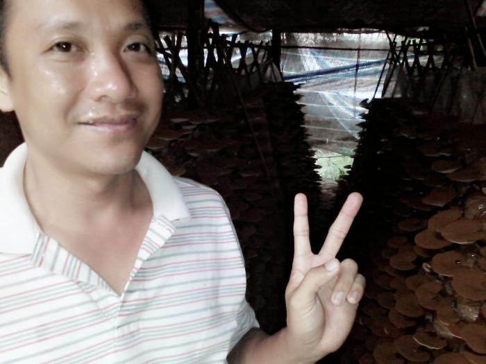 Mua Nấm linh chi đỏ Việt Nam -Trang trại nấm linh chi Củ Chi TPHCM -Gọi Mr Sơn - 09756030045