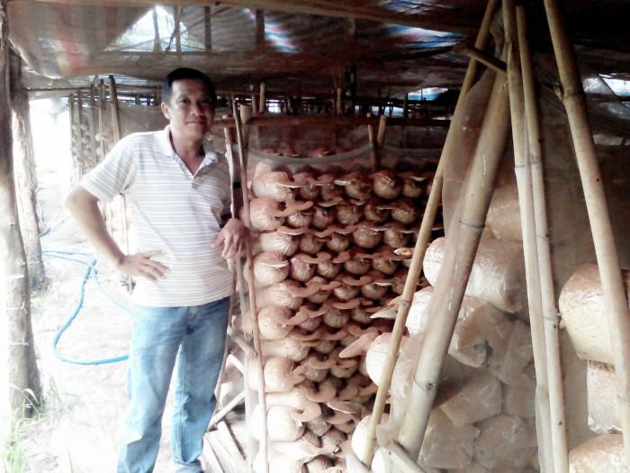 Mua Nấm linh chi đỏ Việt Nam -Trang trại nấm linh chi Củ Chi TPHCM -Gọi Mr Sơn - 09756030046