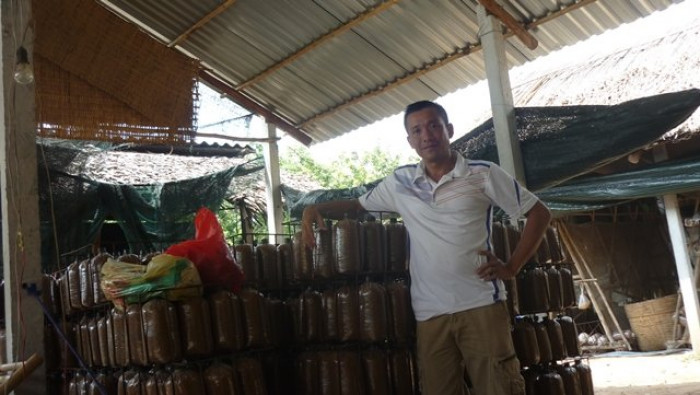 Mua Nấm linh chi đỏ Việt Nam -Trang trại nấm linh chi Củ Chi TPHCM -Gọi Mr Sơn - 09756030047