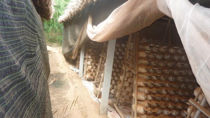 Mua Nấm linh chi đỏ Việt Nam -Trang trại nấm linh chi Củ Chi TPHCM -Gọi Mr Sơn - 097560300420