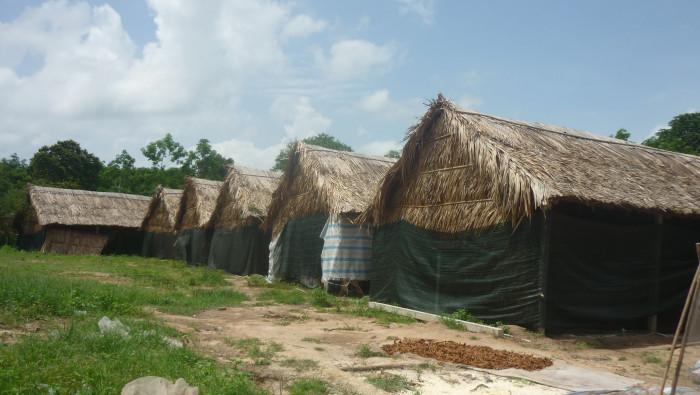 Mua Nấm linh chi đỏ Việt Nam -Trang trại nấm linh chi Củ Chi TPHCM -Gọi Mr Sơn - 097560300424