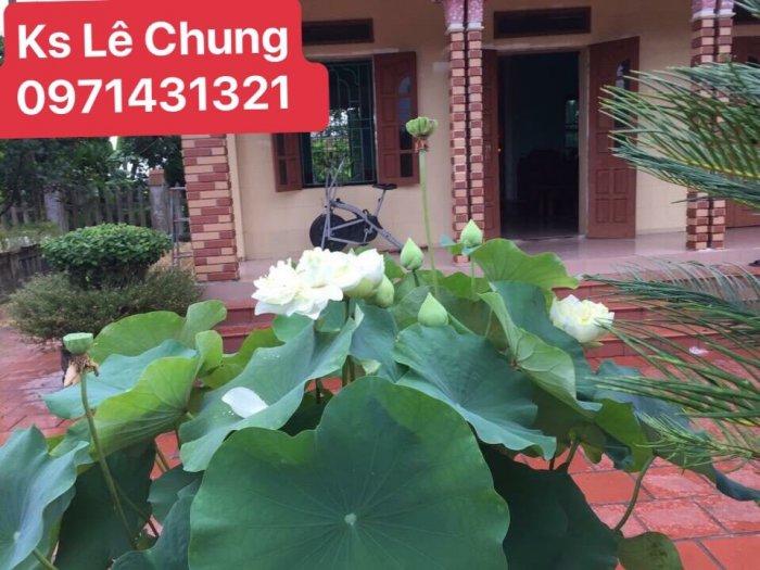 Hướng dẫn cách chăm sóc cây hoa sen bách diệp trắng, hồng - 1 loài sen cao quý5