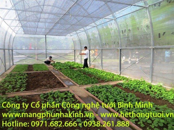 Màng phủ nông nghiệp2