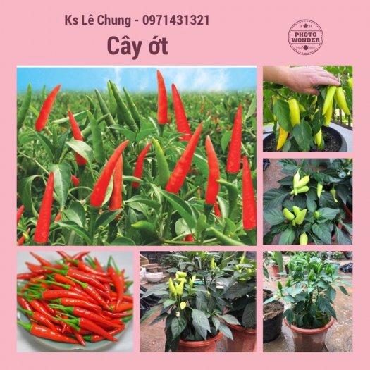 Chuyên cung cấp cây giống ớt trồng tại nhà3