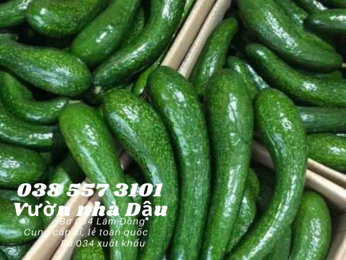 Bơ 034 Lâm Đồng Vườn nhà Dậu giá bơ 034 hôm nay  Call  038 557 3101 - cung cấp sỉ lẻ bơ 0344
