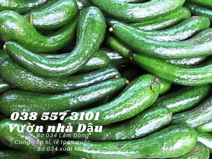Bơ 034 Lâm Đồng Vườn nhà Dậu giá bơ 034 hôm nay  Call  038 557 3101 - cung cấp sỉ lẻ bơ 0346