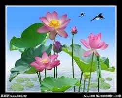 Tranh hoa sen 3d - tranh gạch 3d hoa sen - SCB58