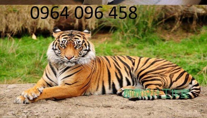 Tranh con hổ - tranh gạch 3d con hổ - XVN78