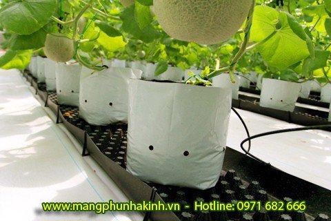 Bạt trải nông nghiệp,bạt phủ dưới đất, bạt địa nông nghiệp tại Hà Nội, bạt địa dùng cho nhà kính nhà lưới2