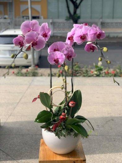 Chậu hoa lan hồ điệp 3 cành màu tím - HLNK010