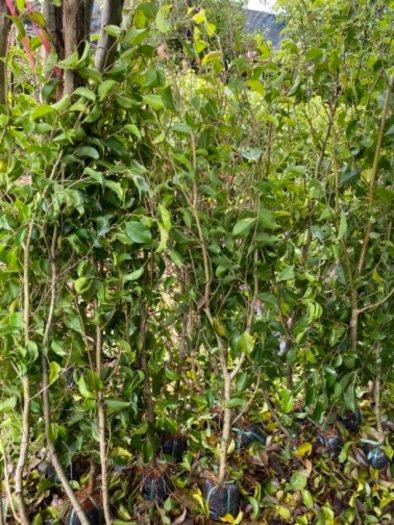 Nhánh cây xanh hàng rào16