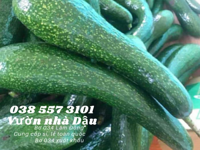 Bơ 034 Lâm Đồng - 034 Avocado from Lam Dong Viet Nam  -Vườn nhà Dậu 038 557 31010