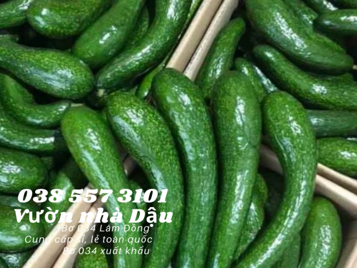 Bơ 034 Lâm Đồng - 034 Avocado from Lam Dong Viet Nam  -Vườn nhà Dậu 038 557 31013