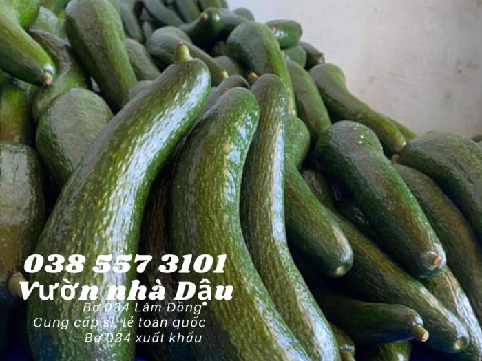 Bơ 034 Lâm Đồng - 034 Avocado from Lam Dong Viet Nam  -Vườn nhà Dậu 038 557 31017
