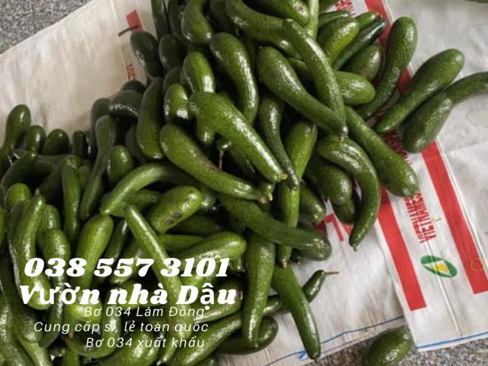 Bơ 034 Lâm Đồng - 034 Avocado from Lam Dong Viet Nam  -Vườn nhà Dậu 038 557 31018