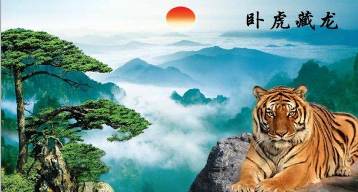 Tranh hổ - tranh gạch 3d tranh hổ phong thủy10