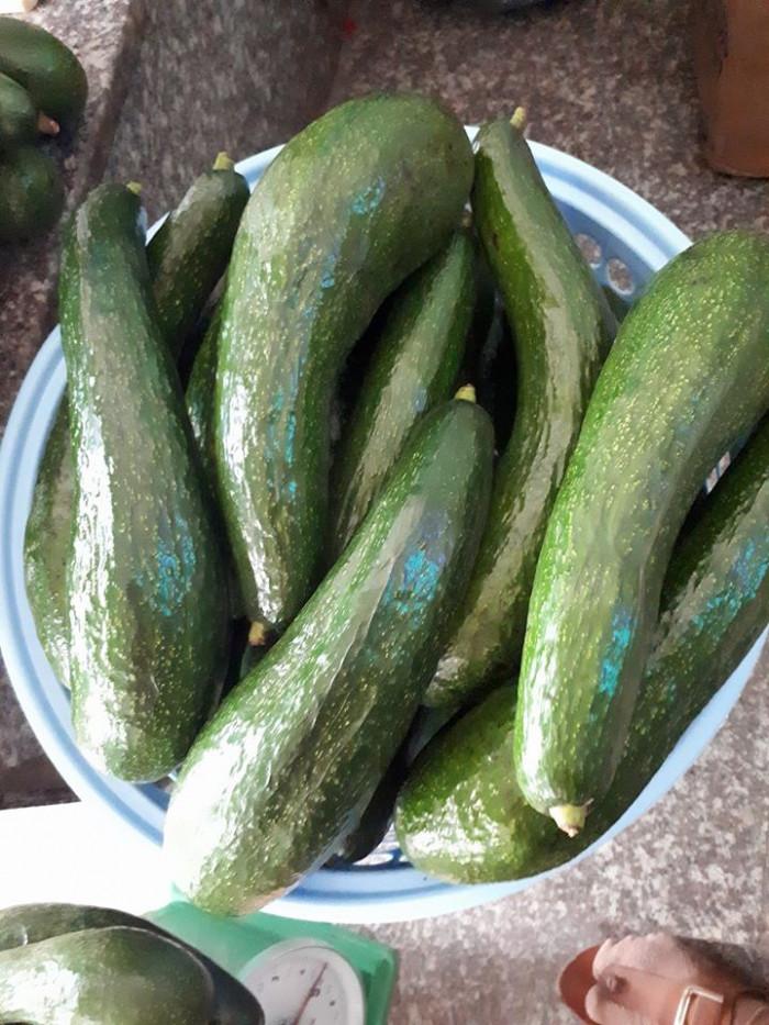 Vựa bơ Lâm Đồng chuyên giá sỉ bơ 34 bơ sáp Vườn nhà Dậu  -038 557 3101  - Bơ 034 xuất khẩu 1