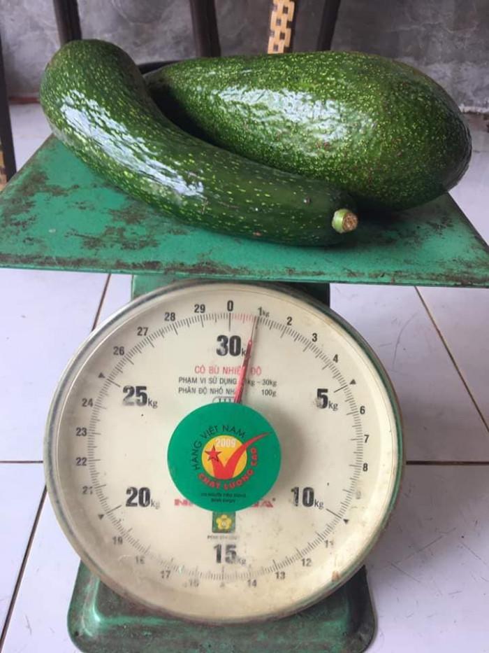Vựa bơ Lâm Đồng chuyên giá sỉ bơ 34 bơ sáp Vườn nhà Dậu  -038 557 3101  - Bơ 034 xuất khẩu 18