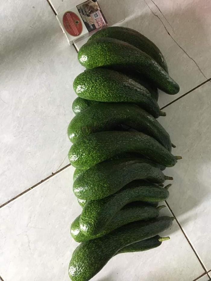 Vựa bơ Lâm Đồng chuyên giá sỉ bơ 34 bơ sáp Vườn nhà Dậu  -038 557 3101  - Bơ 034 xuất khẩu 19