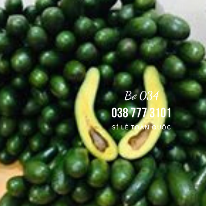 Bơ 034 sỉ bỏ sỉ từ Vườn Nhà Dậu Bao  - Gọi 038 557 3101 2