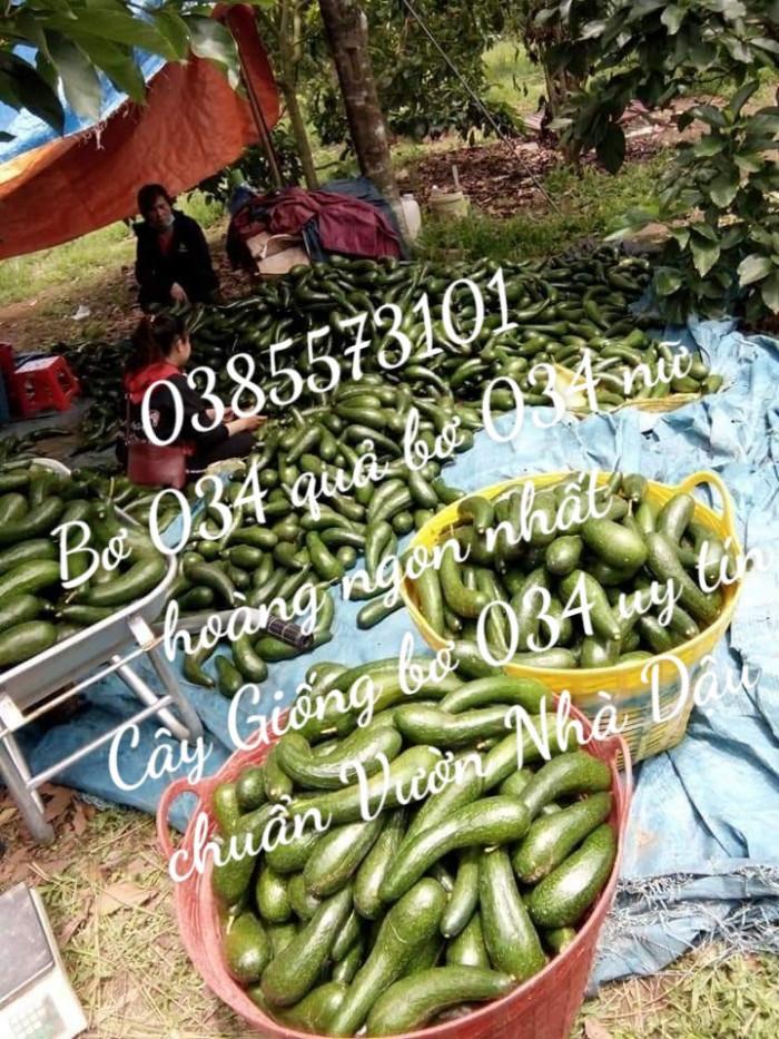 Bơ 034 sỉ bỏ sỉ từ Vườn Nhà Dậu Bao  - Gọi 038 557 3101 7