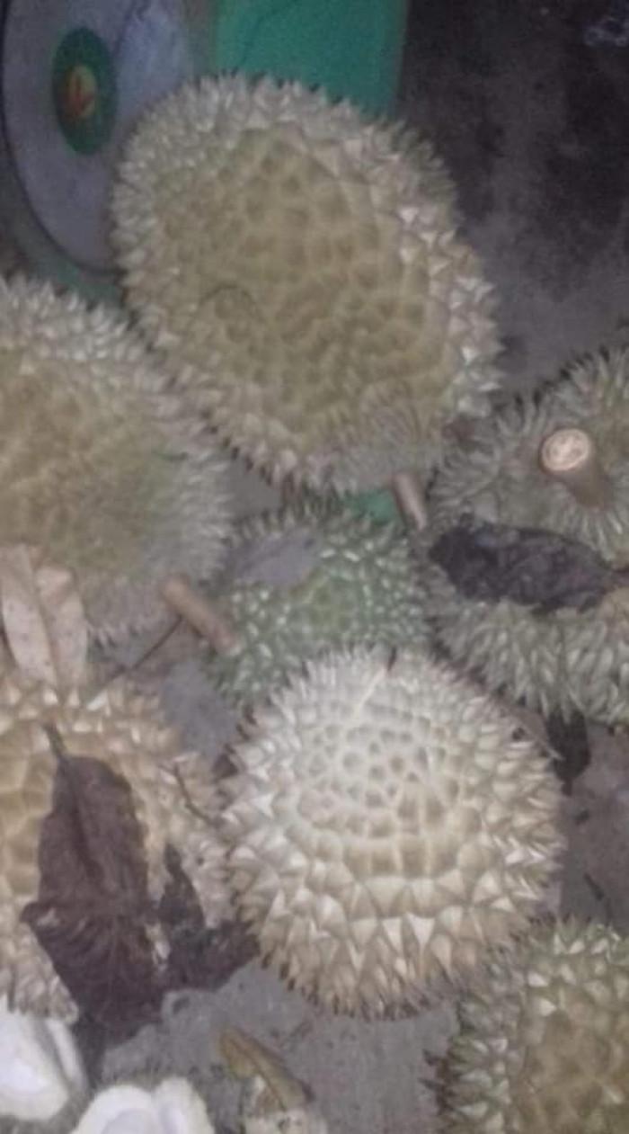 Sầu riêng chín cây Sầu riêng rụng Nhà Vườn Tại Gia bao ăn  0938691586 4