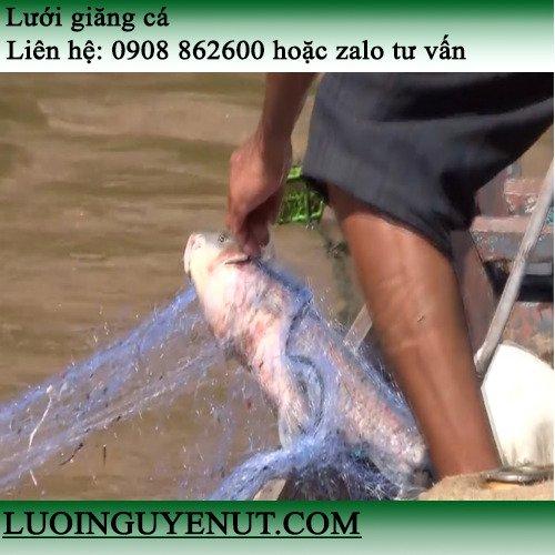 Lưới giăng cá chẽm, cá lóc lớn1